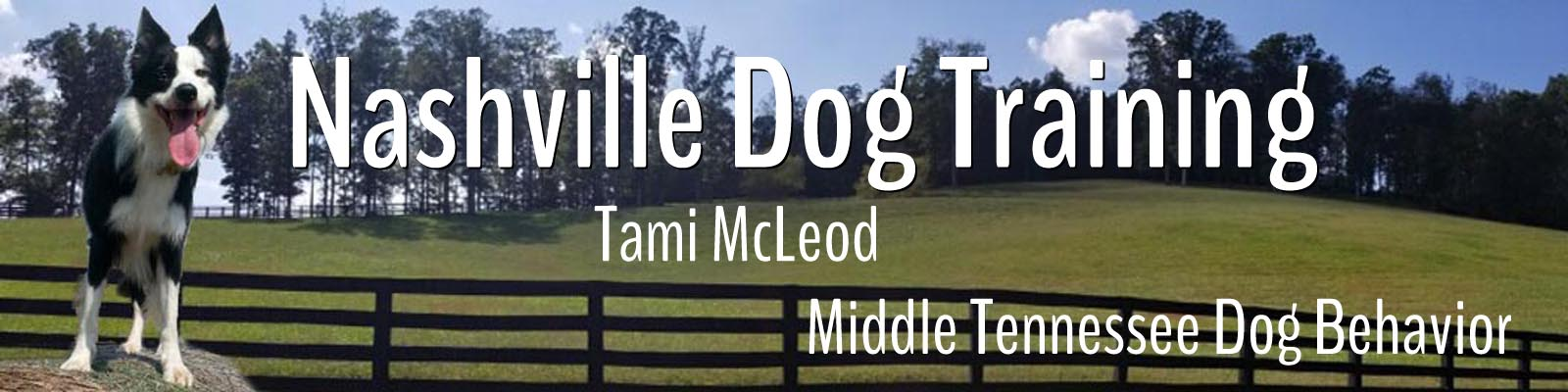 Nashville Dog Training | Tami McLeod Middle Tennessee Dog Behavior